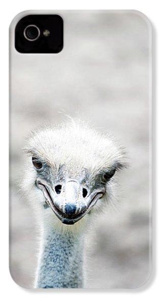 Ostrich IPhone 4 Case by Lauren Mancke