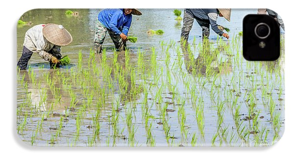 Paddy Field 1 IPhone 4 Case by Werner Padarin