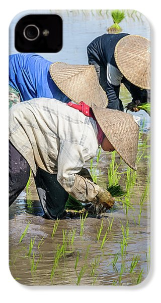 Paddy Field 2 IPhone 4 Case by Werner Padarin