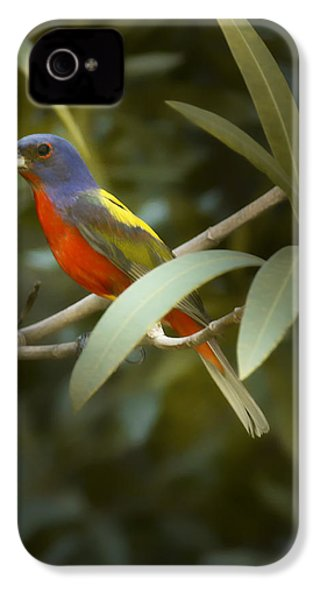 Painted Bunting Male IPhone 4 Case by Phill Doherty