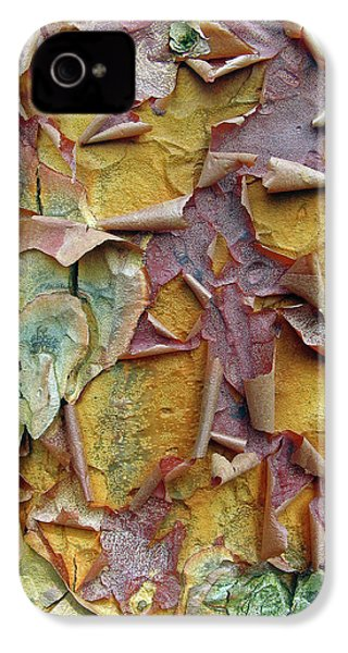 Paperbark Maple Tree IPhone 4 Case by Jessica Jenney