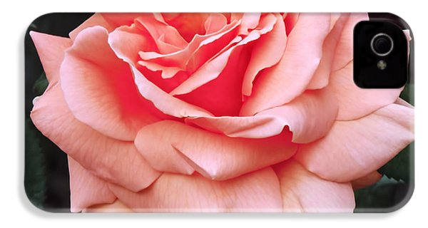 Peach Rose IPhone 4 Case by Rona Black