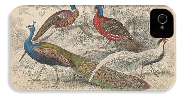 Peacocks IPhone 4 Case by Rob Dreyer