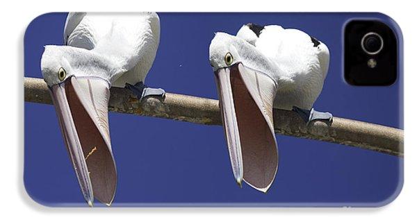 Pelican Burp IPhone 4 Case by Avalon Fine Art Photography