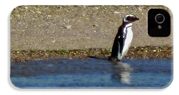 Penguin On The Beach IPhone 4 / 4s Case by Sandy Taylor