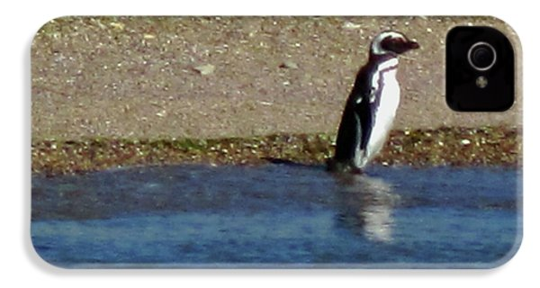 Penguin On The Beach IPhone 4 Case by Sandy Taylor