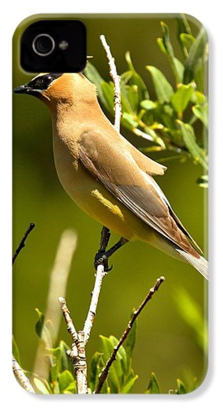 Perfectly Perched IPhone 4 Case by Adam Jewell