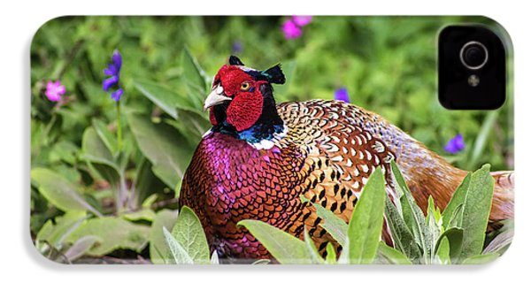 Pheasant IPhone 4 Case by Martin Newman