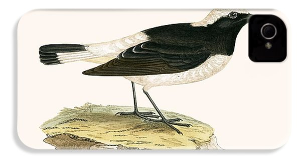 Pied Wheatear IPhone 4 Case by English School