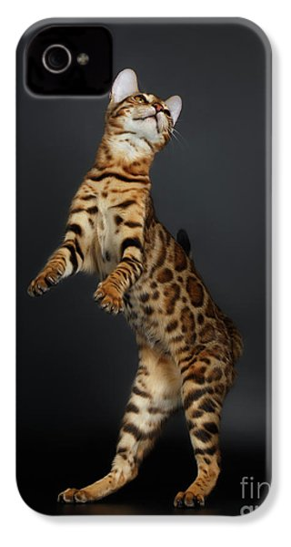 Playful Female Bengal Cat Stands On Rear Legs IPhone 4 / 4s Case by Sergey Taran