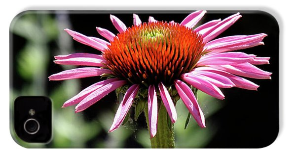 Pretty Pink Coneflower IPhone 4 Case by Rona Black