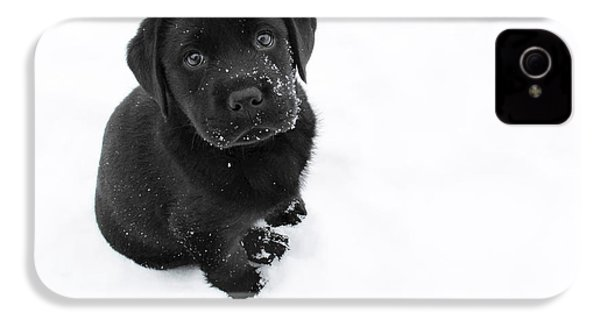 Puppy In The Snow IPhone 4 Case by Larry Marshall