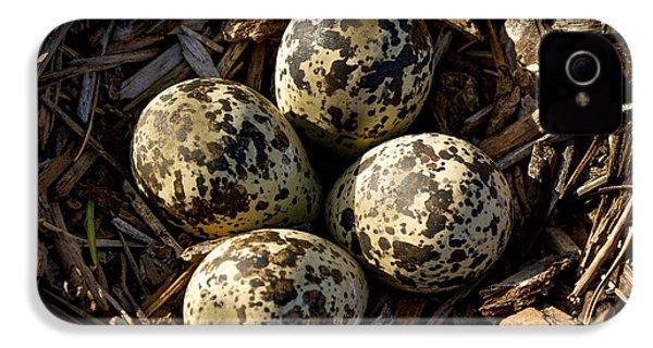 Quartet Of Killdeer Eggs By Jean Noren IPhone 4 Case by Jean Noren