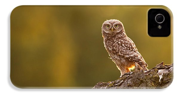 Qui, Moi? Little Owlet In Warm Light IPhone 4 Case by Roeselien Raimond