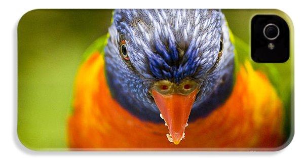 Rainbow Lorikeet IPhone 4 Case by Avalon Fine Art Photography