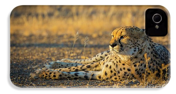 Reclining Cheetah IPhone 4 Case by Inge Johnsson