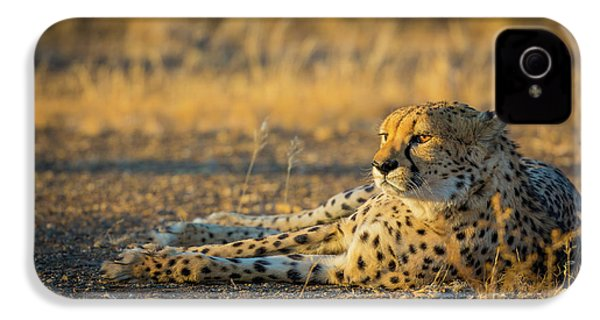 Reclining Cheetah IPhone 4 / 4s Case by Inge Johnsson