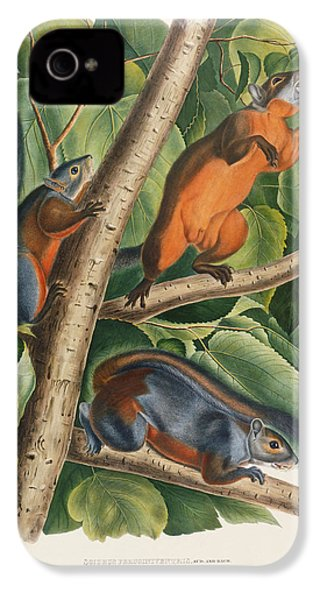 Red Bellied Squirrel  IPhone 4 / 4s Case by John James Audubon