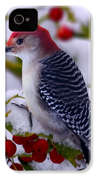 Red Bellied Woodpecker IPhone 4 Case