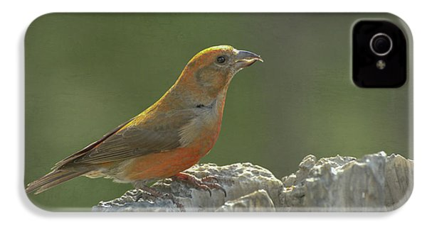 Red Crossbill IPhone 4 Case