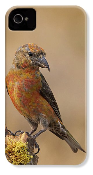 Red Crossbill IPhone 4 / 4s Case by Doug Herr