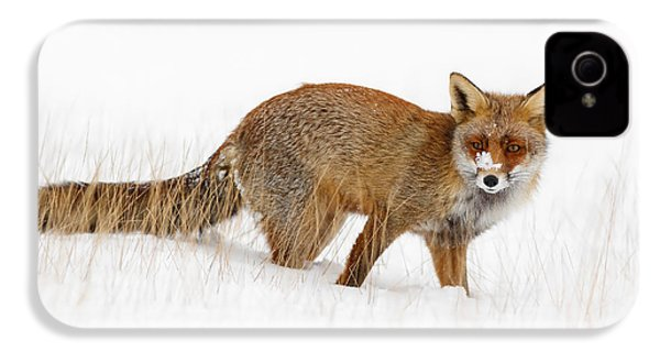 Red Fox In A Snow Covered Scene IPhone 4 Case