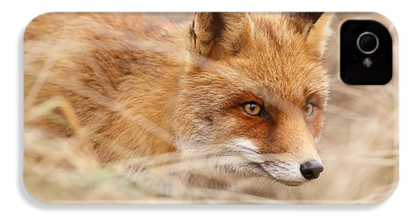 Red Fox On The Hunt IPhone 4 Case