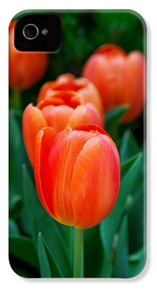 Red Tulips IPhone 4 Case by Az Jackson