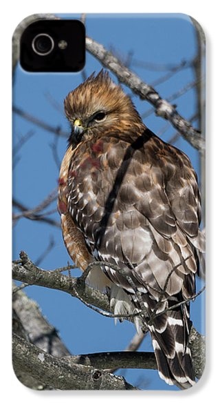 IPhone 4 Case featuring the photograph Red Shouldered Hawk 2017 by Bill Wakeley
