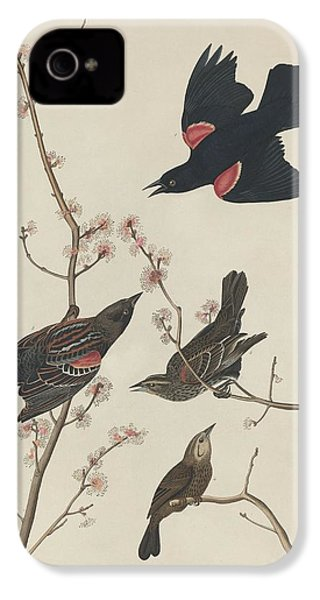 Red-winged Starling IPhone 4 Case by Dreyer Wildlife Print Collections