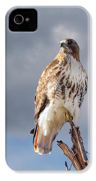 Redtail Portrait IPhone 4 Case by Bill Wakeley