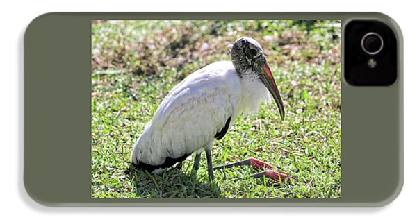 Resting Wood Stork IPhone 4 Case