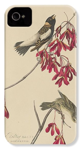 Rice Bunting IPhone 4 Case by Rob Dreyer