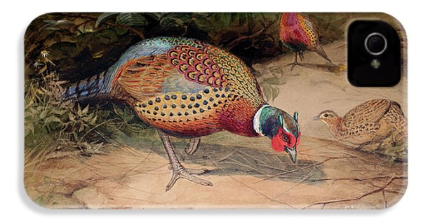 Ring Necked Pheasant IPhone 4 Case by Joseph Wolf