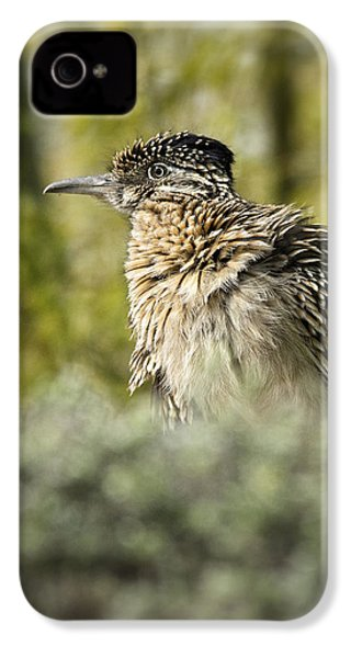 Roadrunner On Guard  IPhone 4 / 4s Case by Saija  Lehtonen