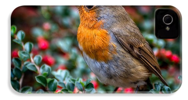 Robin Redbreast IPhone 4 Case by Adrian Evans
