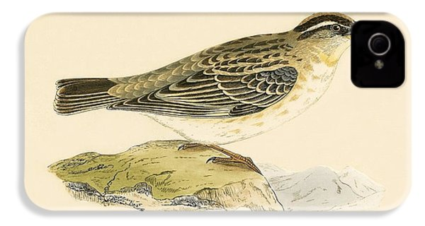 Rock Sparrow IPhone 4 Case by English School