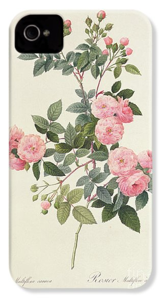 Rosa Multiflora Carnea IPhone 4 Case by Pierre Joseph Redoute