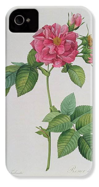 Rosa Turbinata IPhone 4 Case