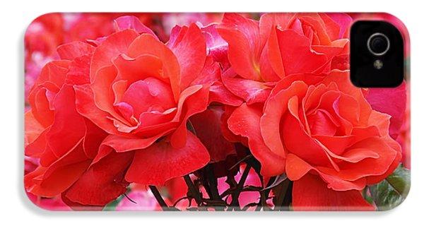 Rose Abundance IPhone 4 / 4s Case by Rona Black