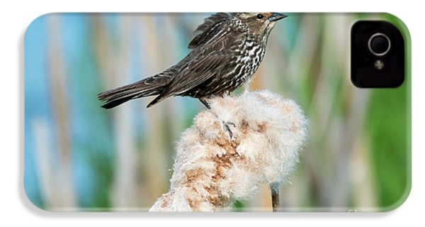 Ruffled Feathers IPhone 4 Case by Mike Dawson