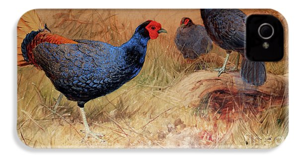 Rufous Tailed Crested Pheasant IPhone 4 Case by Joseph Wolf