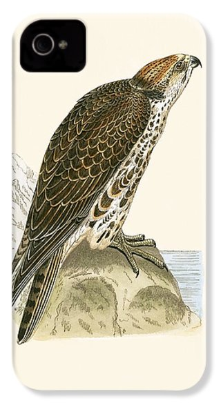 Saker Falcon IPhone 4 / 4s Case by English School