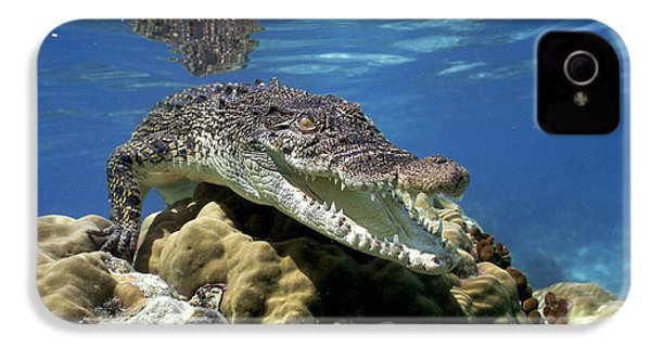 Saltwater Crocodile Smile IPhone 4 Case by Mike Parry