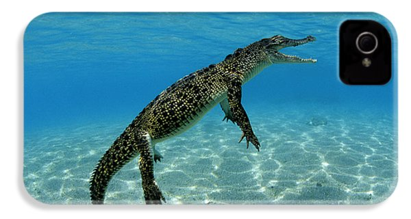 Saltwater Crocodile IPhone 4 Case by Franco Banfi and Photo Researchers