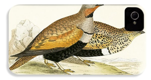 Sand Grouse IPhone 4 Case by English School