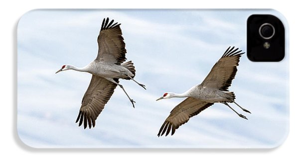 Sandhill Crane Approach IPhone 4 / 4s Case by Mike Dawson
