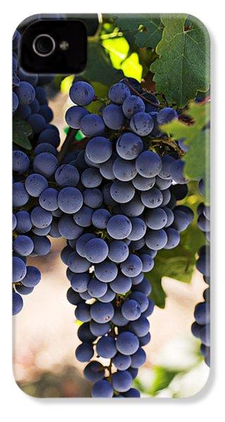 Sauvignon Grapes IPhone 4 Case by Garry Gay