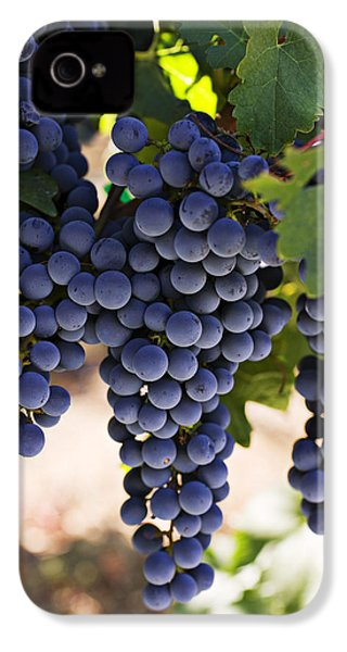 Sauvignon Grapes IPhone 4 / 4s Case by Garry Gay