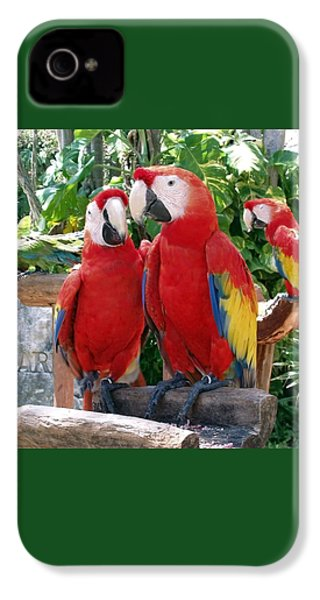 Scarlet Macaws IPhone 4 Case by Ellen Henneke